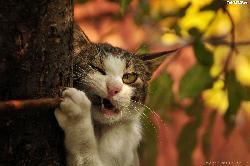 Felietony-Nazwijmy patyk drzewem